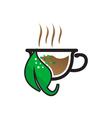 Herbal Tea vector image vector image