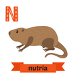 Nutria N letter Cute children animal alphabet in vector image vector image