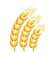 ripe wheat ear vector image