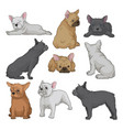 cartoon set of boston terrier puppies in vector image vector image