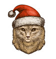 cat kitty in a christmas hat sketch vintage vector image vector image