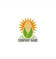 sun corn logo vector image
