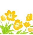 Three yellow spring tulips vector image vector image