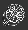 candytuft chalk icon aster garden flower iberis vector image