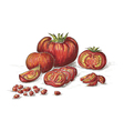 Hand drawn tomatos in color vector image vector image