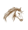 Horse sketch icon of arabian stallion vector image vector image