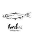 sardine vector image vector image