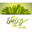 spring seasonal greeting card with fresh green vector image