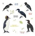 set of different birds king penguin common loon vector image