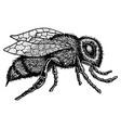 monochrome animal icon vector image