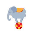elephant on ball isolated circus animals on white vector image