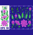 floral elements set with violet daisy type vector image vector image