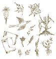 Garden herbs sketch with birds plants gumboots vector image vector image