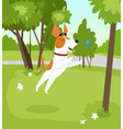 cute jack russell terrier dog playing with ball in vector image vector image