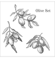 Ink hand drawn olive set vector image vector image