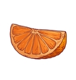 Juicy orange on a white background vector image vector image