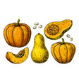 pumpkin and butternut squash drawing set vector image vector image