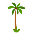 tropical palm tree icon flat style vector image vector image
