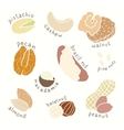 Different nuts set vector image vector image