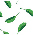 green leaves pattern background pattern green vector image