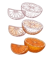 Set of juicy orange on a white background vector image vector image
