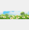 spring landscape green grass and chamomile 3d vector image