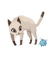 cartoon cat character siamese colorpoint pet vector image