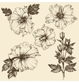 Hibiscus flower Hand drawn floral set vector image vector image