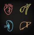 human internal organs neon icon set in line style vector image