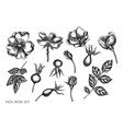 set hand drawn black and white dog rose vector image vector image