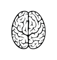 Brain top view vector image vector image