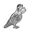homing carrier pigeon sketch vector image vector image