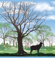 spring landscape with wild animal elk forest vector image vector image