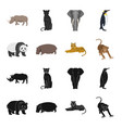 bamboo bear hippopotamus wild animal tiger vector image vector image