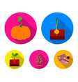 onion pumpkin and other vegetablesplant set vector image vector image