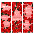 rose flower banner for spring holiday celebration vector image vector image
