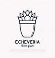 succulent echeveria in pot thin line icon vector image