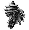 Ecphora gardnerae vector image
