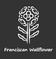 franciscan wallflower chalk icon garden flowering vector image vector image