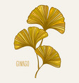 ginkgo biloba branch with leaves vector image vector image