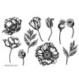 set hand drawn black and white poppy vector image vector image