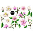 set of white and pink magnolia flowers vector image