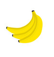 bunch fresh yellow bananas with dotted line vector image vector image
