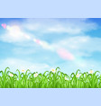 grass and flower with sky background vector image vector image