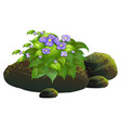 purple flowers and rocks on white background vector image vector image