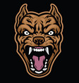 aggressive pitbull dog head vector image vector image