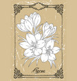 black and white drawing crocus vector image vector image