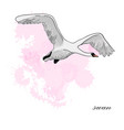 drawing flying swan with vector image