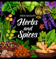 seasonings herbs and spices shop poster vector image vector image
