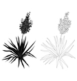 Plant Yucca contours and silhouettes vector image